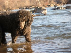 On a Good Day When He Made It To the River