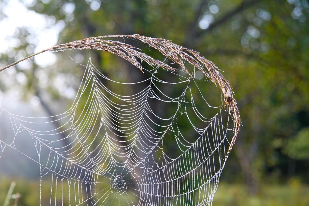 web dew2
